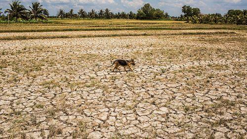 Épisode 5 : Climatiser la finance pour financer le climat