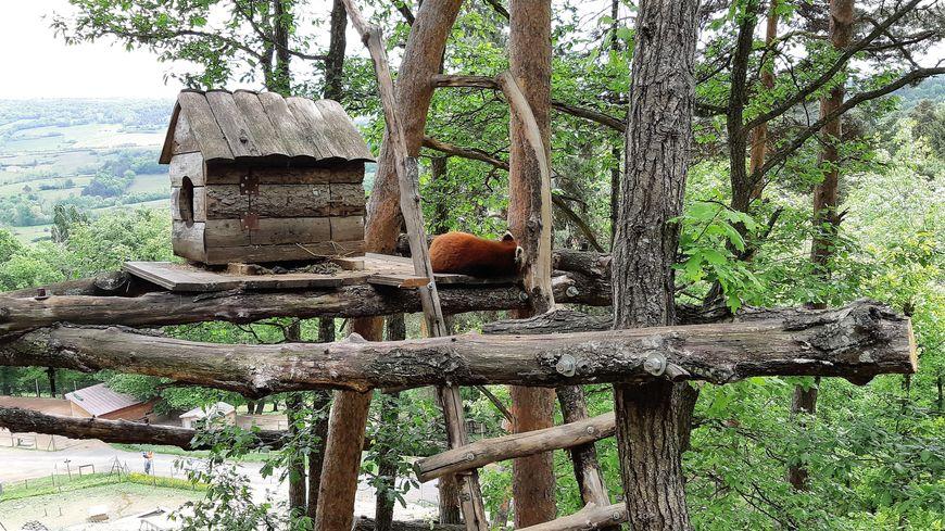 65 espèces rares et menacées à découvrir au Parc animalier d'Auvergne