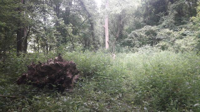 Forêt sauvage en région parisienne, juin 2019.
