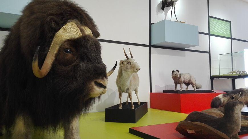 L'exposition sur les animaux rares de la préhistoire se termine le 11 novembre prochain.