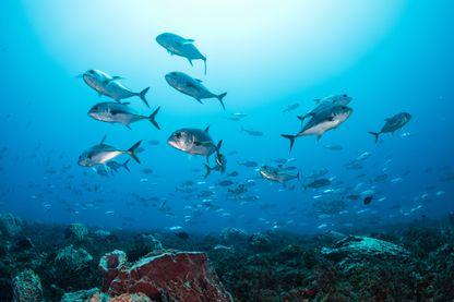 Journée mondiale de l'océan.
