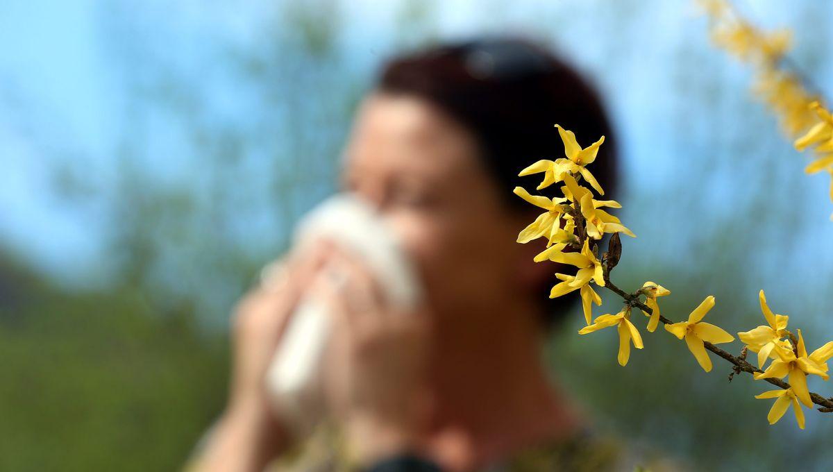 Allergies : une vingtaine de départements en risque très élevé