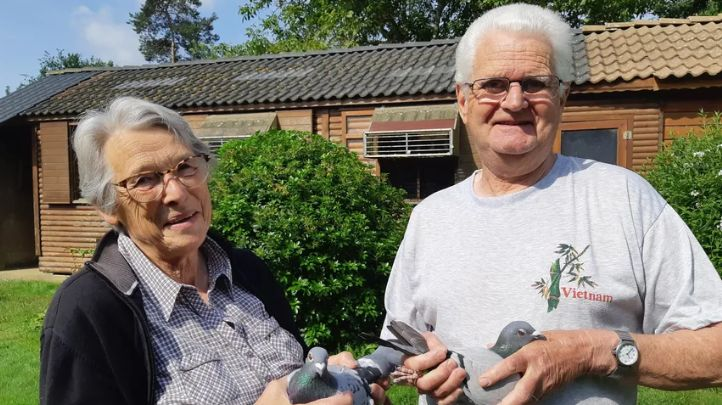 Marcel et Marie Bablé bichonnent 150 pigeons voyageurs à Chevaigné, au Nord de Rennes