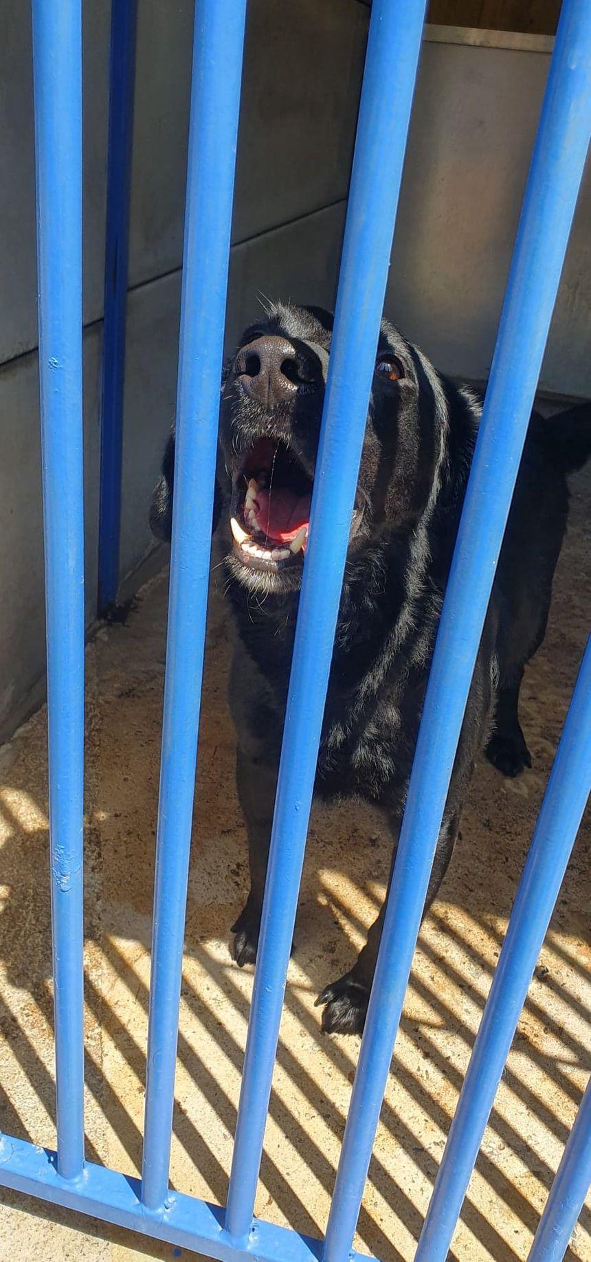 """Caramelo """"un amour de chien, calme et joueur"""" fait partie des 55 chiens à l'adoption"""