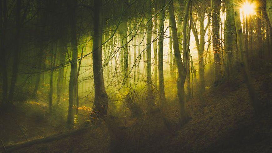 féeries en forêt