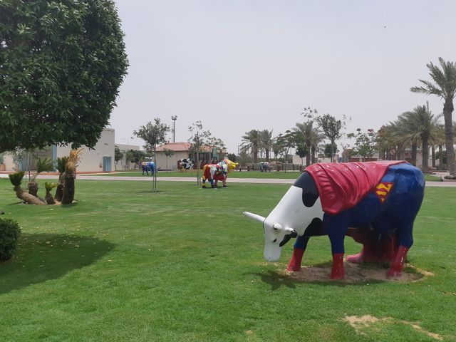 Des vaches colorées qui broutent l'herbe d'une improbable oasis. Bienvenue chez Baladna, dans le désert qatari.