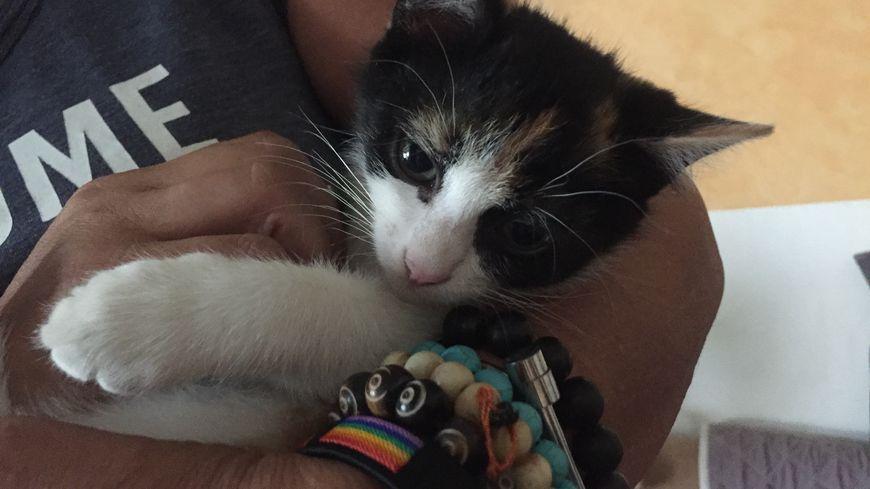 Pearl, deux mois, attend d'être adoptée.