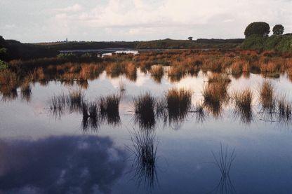 """L'histoire de """"Pactum Salis"""" prend place dans les marais salants de Batz-sur-Mer en Loire-Atlantique"""