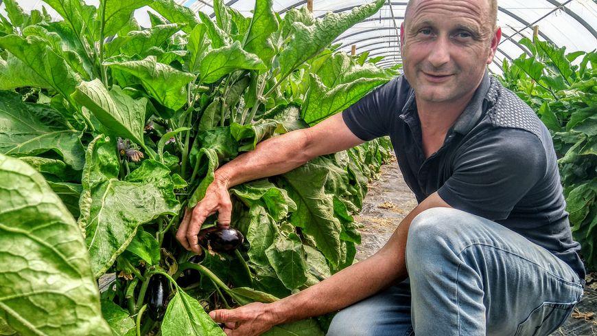 Jérôme Rouch devant ses plants d'aubergines