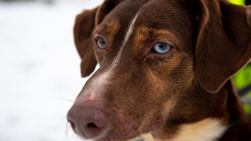 100 000 chiens et chats sont abandonnés chaque année en France.