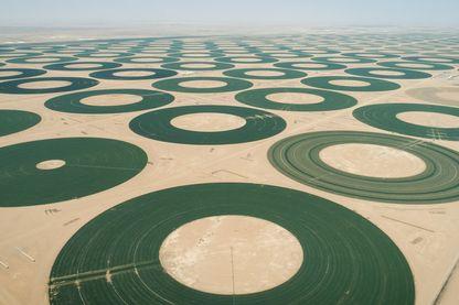 Les fermes circulaires d'Arabie Saoudite, arrosées en continu dans un pays désertique.