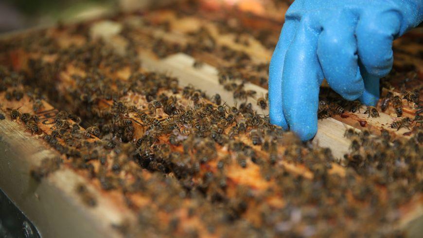Béatrice Robrolle-Mary estime que les politiques ne sont pas assez volontaristes pour préserver nos abeilles
