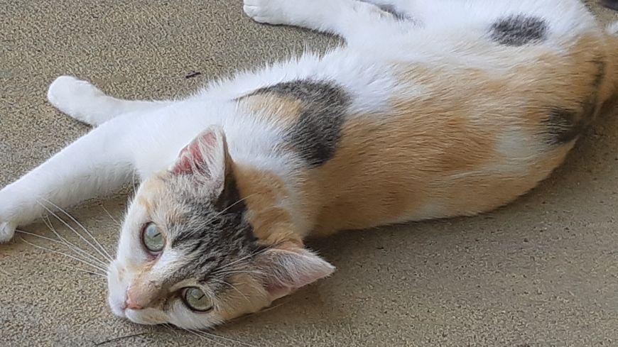 Un chat de la SPA de l'Indre