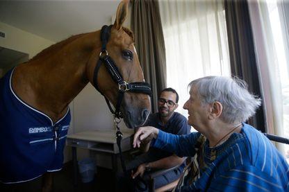 Peyo, le cheval guérisseur