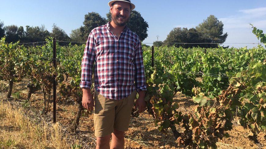 La moitié des vignes d'Émilien Fournel à Sussargues ont brûlé sous l'effet de la canicule