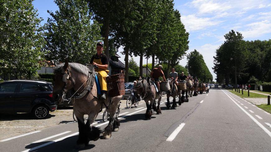 Depuis plus de 500 ans, dans la commune d'Oostduinkerke, on pêche la crevette à cheval ! La commune accueillait ce weekend la 70ème édition de la fête de la crevette.