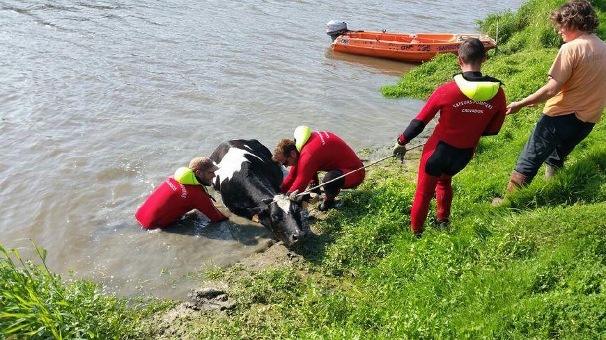 Clémentine était tombée dans les marais près de Bavent dans le Calvados.