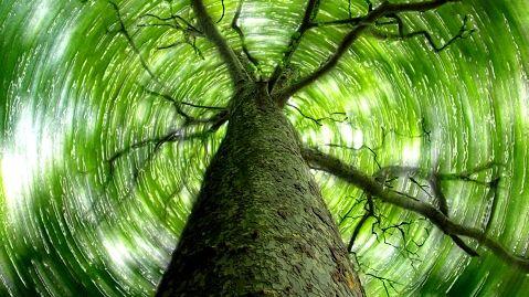 Préservons la forêt