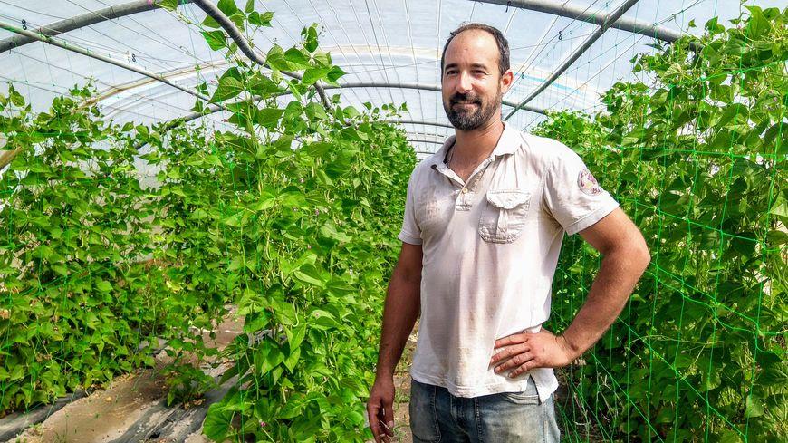 Sébastien Garcia devant ses plants de haricots verts bio