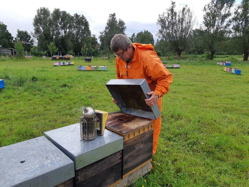 Un apiculteur utilise un enfumoir pour distraire les abeilles au moment d'ouvrir la ruche