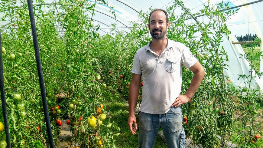 Sébastien Garcia devant ses tomates cerises, marmande, coeur de boeuf bio
