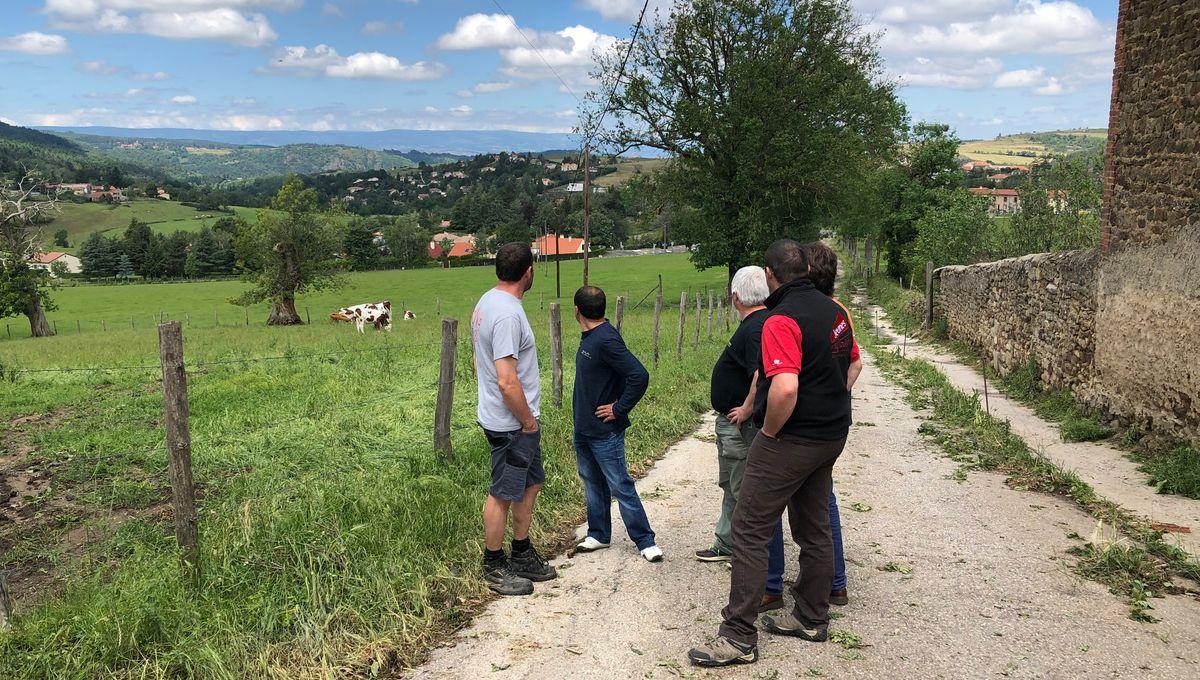 """Orages violents dans la Loire : les agriculteurs font le bilan, """"en 5 minutes tout a été ravagé"""""""