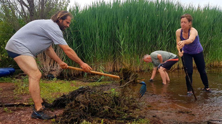 À l'aide de râteaux ou à la force de leurs bras, les bénévoles enlèvent les algues