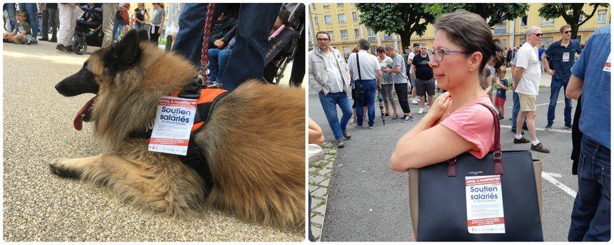 Un chien qui soutient le mouvement !