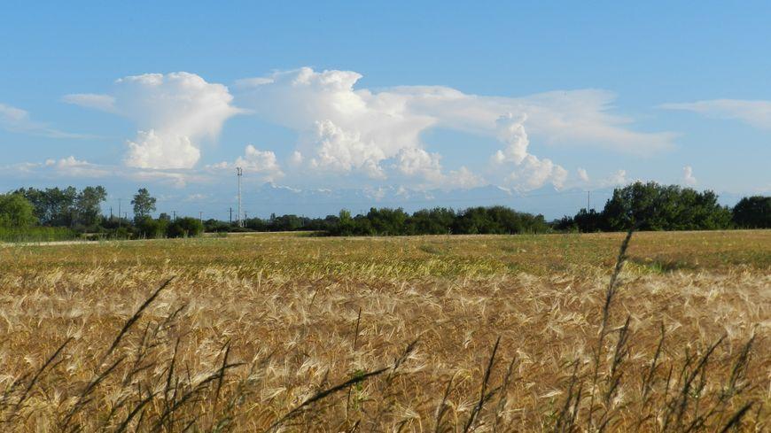 Le groupe Reward avait acheté plus de 1700 hectares dans l'Indre