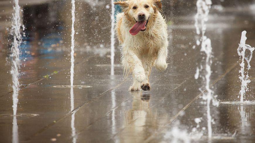 Si les chiens peuvent courir dans les fontaines pour se rafraîchir, ce n'est pas forcément bien vu quand un humain fait pareil.