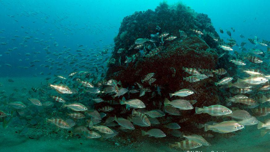 Un des récifs artificiels immergés au large de Capbreton