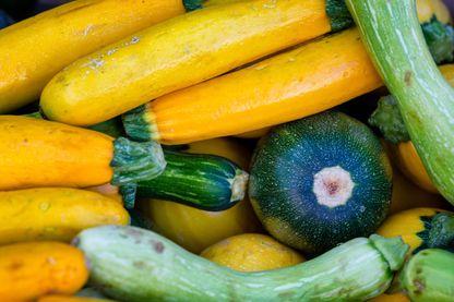 """Jaunes, vertes, rondes, longues... les courgettes à la Une d' """"On va déguster"""""""