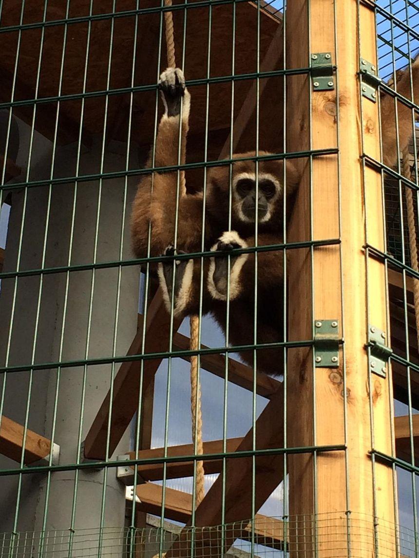 Les singes profitent de serres conçues pour leur épanouissement