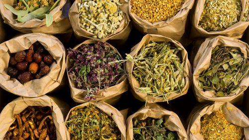 Épisode 2 : Des simples et des mélanges, l'herboristerie sous certificat