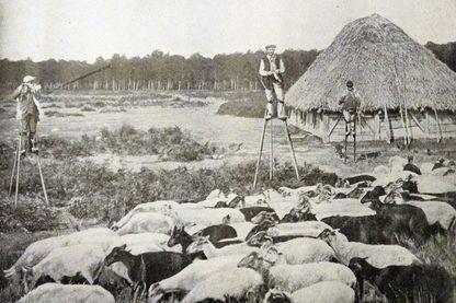 Bergers landais en 1895