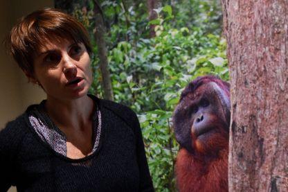 Sabrina Krief sur la piste des grands singes