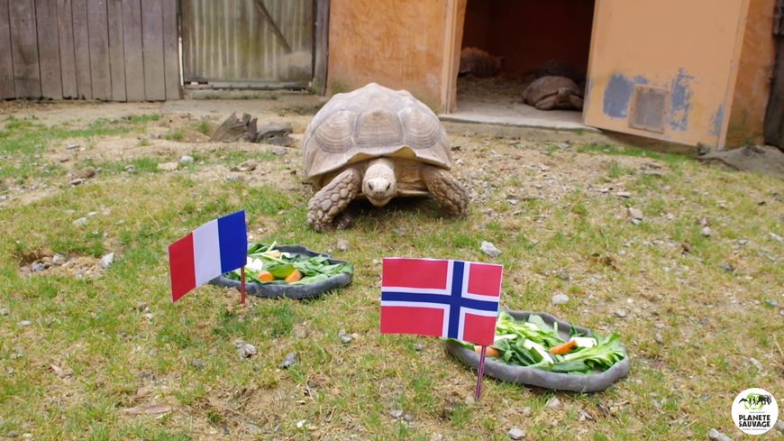 France ou Norvège, quel équipe Ariane a-t-elle choisie ?