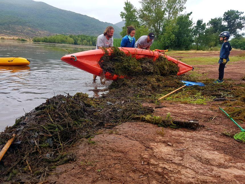 Les bénévoles transportent les tas d'algues dans des canoës pour les rapporter sur la berge plus rapidement