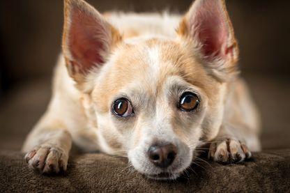 L'anatomie faciale des chiens a changé au cours des millénaires pour leur permettre de mieux communiquer avec les humains
