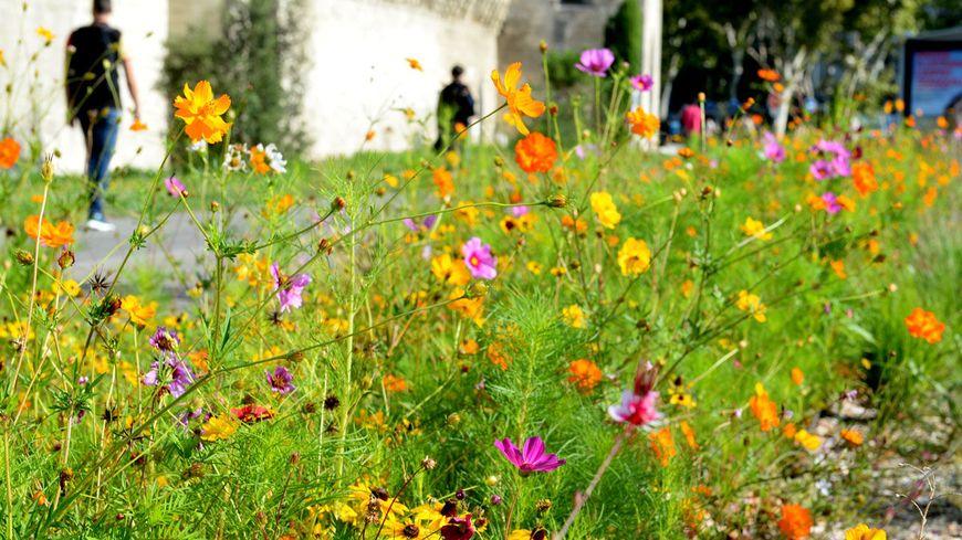 La végétation pousse aux pieds des remparts d'Avignon.