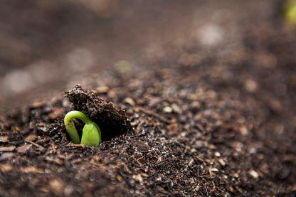 La vie trouve toujours son chemin, comme cette graine qui pousse pour devenir une plante.