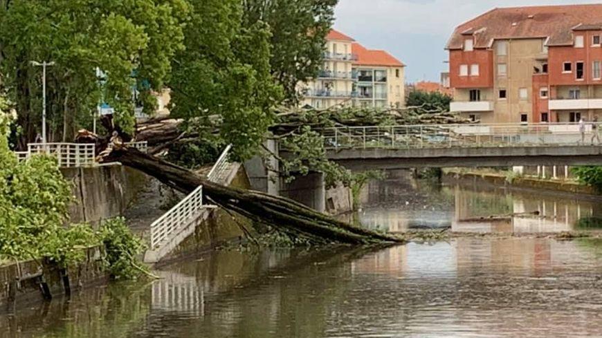 Des arbres ont chuté sur les rives de l'Allier