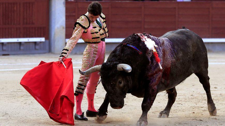 Un toro de l'élevage de Victorino Martin, ici, à la corrida de Madrid (Espagne)