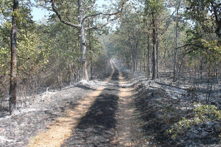 Le feu s'est propagé très vite à la végétation