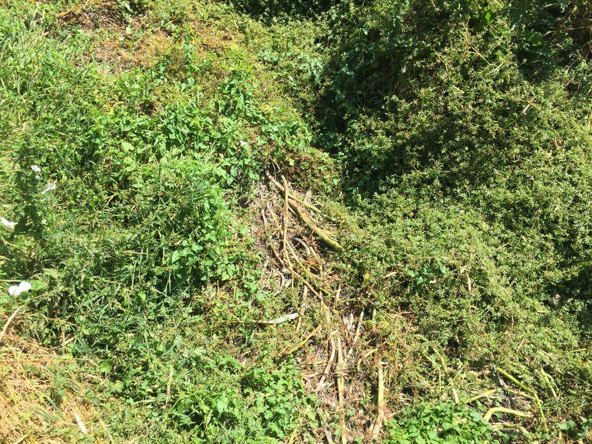 En quelques semaines, herbe et mauvaises herbes ont pris la place du cours d'eau.