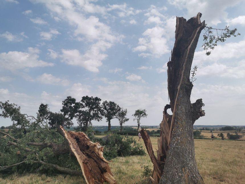 Des arbres tout simplement ouverts en deux sous l'effet de la mini-tornade