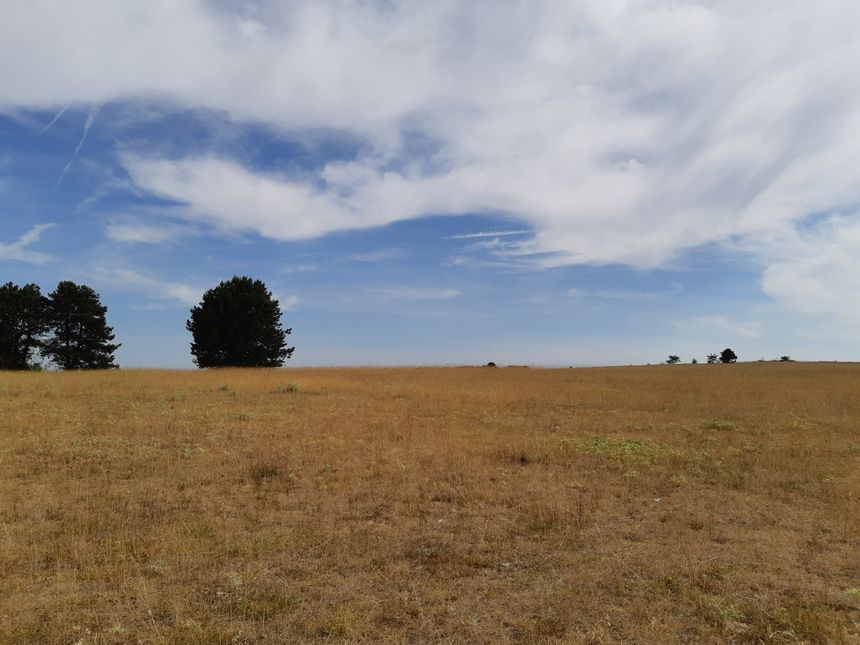 Le plateau de Malzéville est particulièrement sec au cours de l'été 2019, ici le 22 juillet