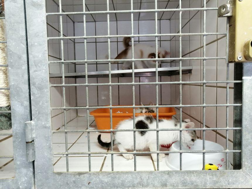 Une portée de chatons qui a été retrouvée par le refuge