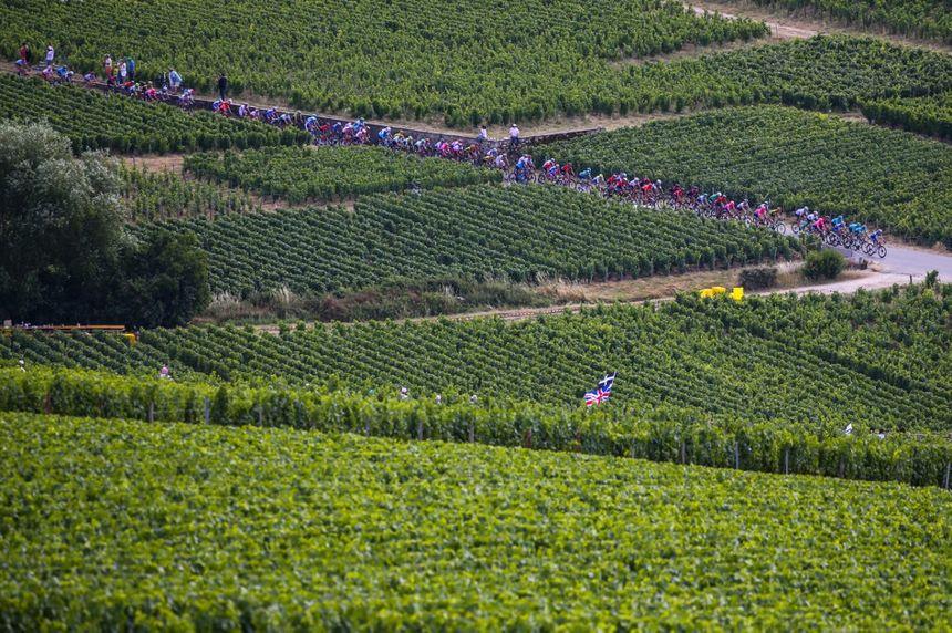 Le peloton dans les vignes à Épernay