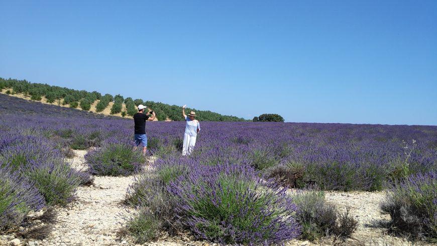 Les touristes viennent se photographier dans les champs de lavande du plateau de Valensole